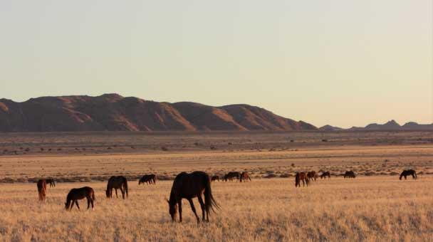 Kondudo-cavalli