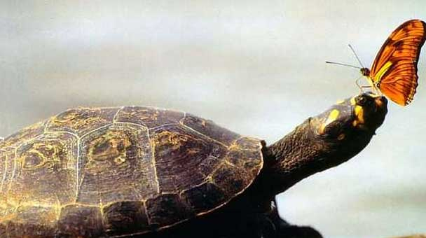 adottare-una-tartaruga