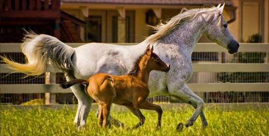 alimentazione-cavalli