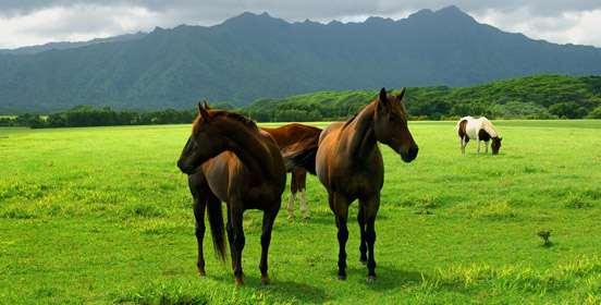 alimentazione-cavallo