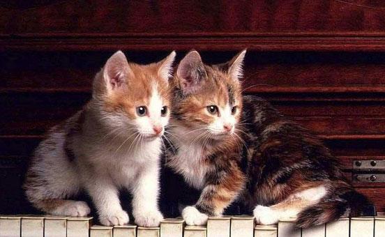 allevare-i-gattini-in-coppia