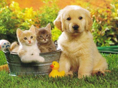 cani-gatti-sterilizzati-castrati