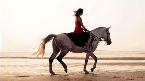 capire-e-conoscere-il-cavallo