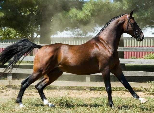 cavallo-hackney