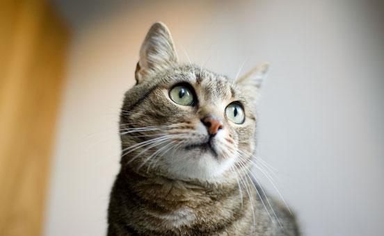 cinque-suggerimenti-per-addestrare-il-gatto