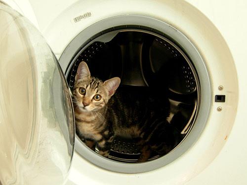 come-rendere-la-casa-a-prova-di-gatto