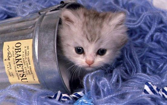 come-scegliere-il-gattino-adatto-a-te