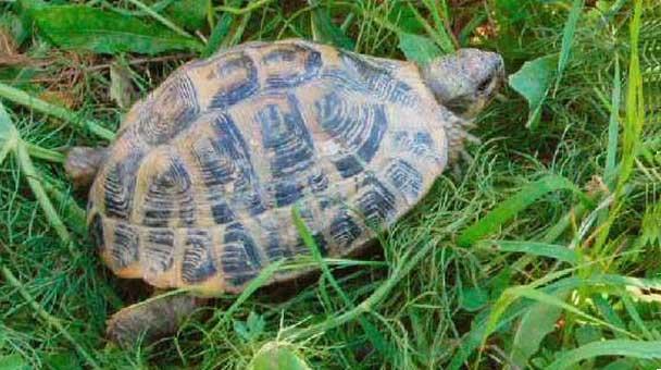 come-scegliere-una-tartaruga-in-salute