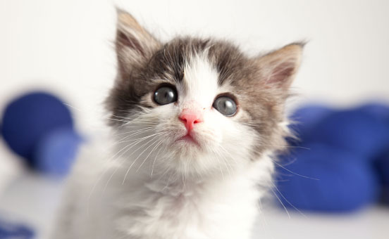 consigli-per-allevare-un-gattino