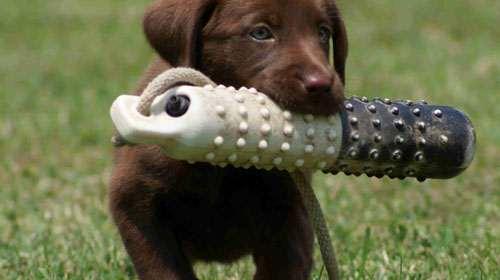 cucciolo-che-gioca