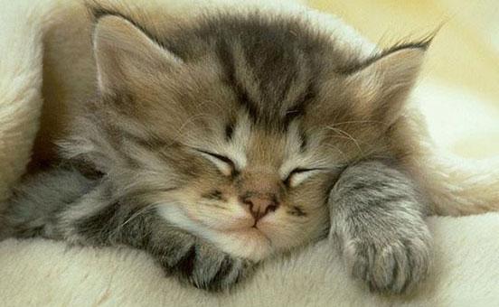 gatto-e-antidolorifici