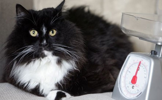 gatto-e-peso