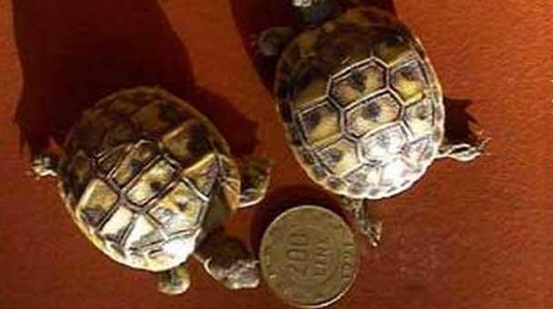 guida-all-acquisto-di-una-tartaruga