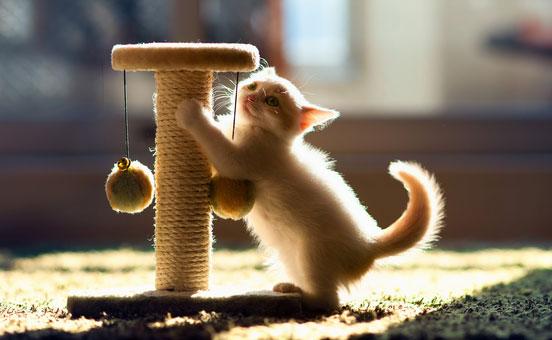 i-gatti-e-l-esercizio-fisico-2