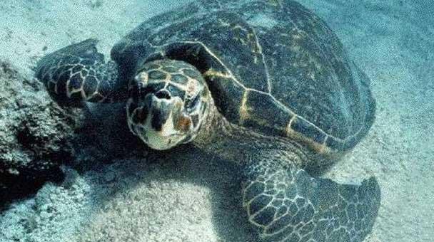 il-corpo-della-tartaruga