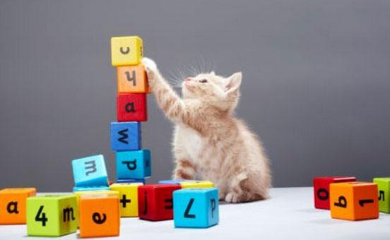 il-gatto-e-l-esercizio-fisico-1
