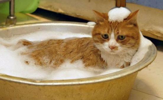 lavare-il-gatto