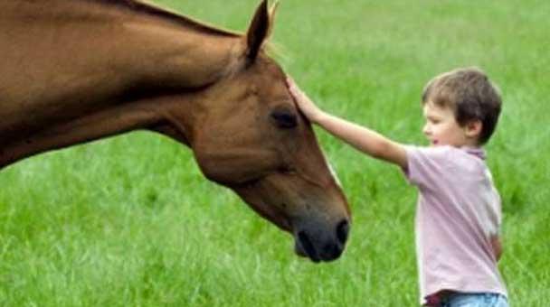 le-cure-e-le-attenzioni-di-cui-un-cavallo-ha-bisogno