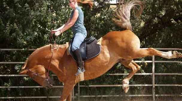 le-reazioni-imprevedibili-del-cavallo