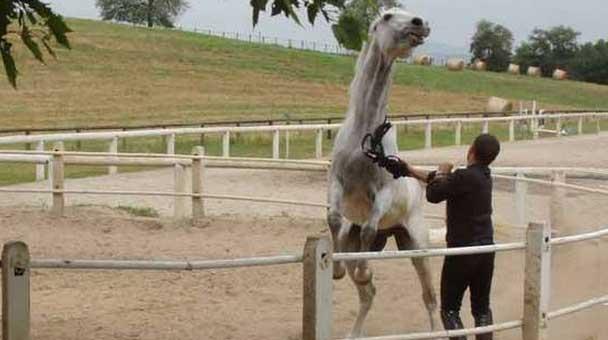 le-strutture-che-ospitano-piu-di-un-cavallo