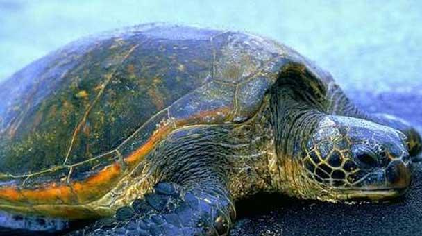 le-tartarughe-ed-il-clima