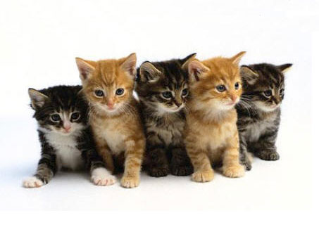 nomi-comuni-di-gatto