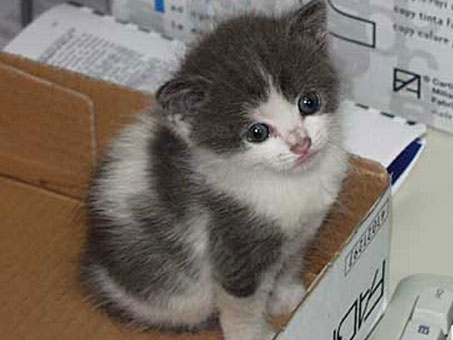 portare-un-gattino-a-casa