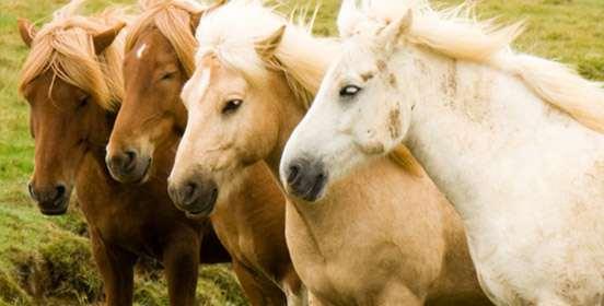 salute-del-cavallo