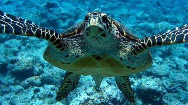 struttura-fisica-delle-tartarughe