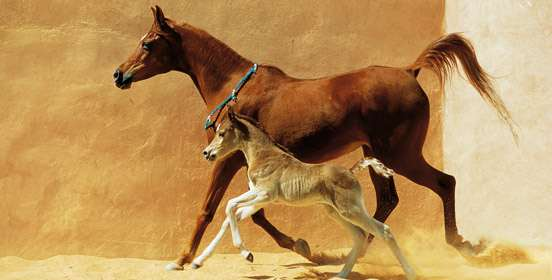 tendiniti-cavallo