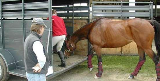 trasporto-cavalli