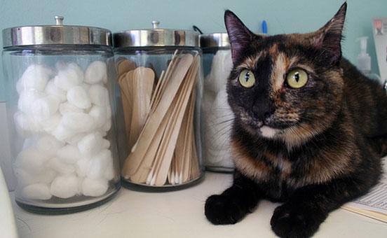 vaccinare-il-gatto