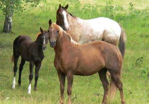 cavalli-in-vendita