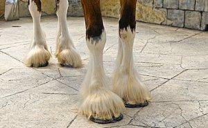 arti cavalli