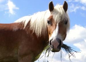 cavallo e cibo