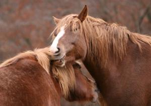 tatto cavalli