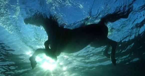 cavallo in acqua