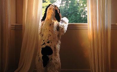 separazione-cane