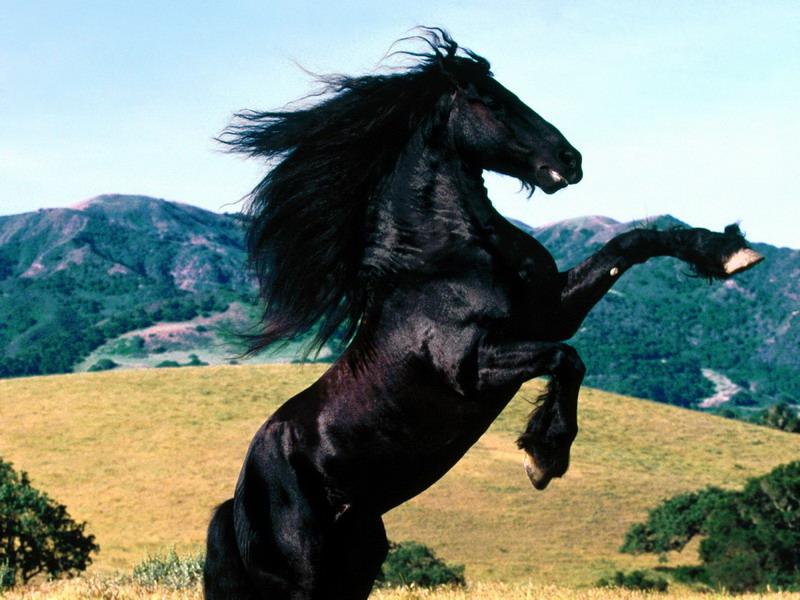 simbologia cavallo
