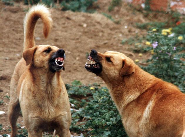 cane-territorio