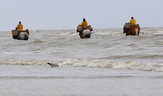 cavalli e pesca