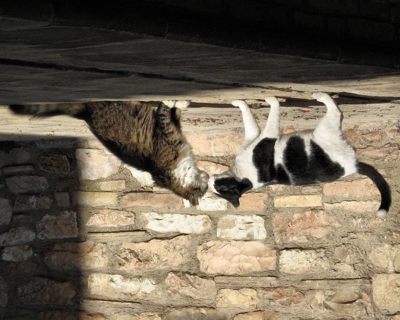 gatti e socialità