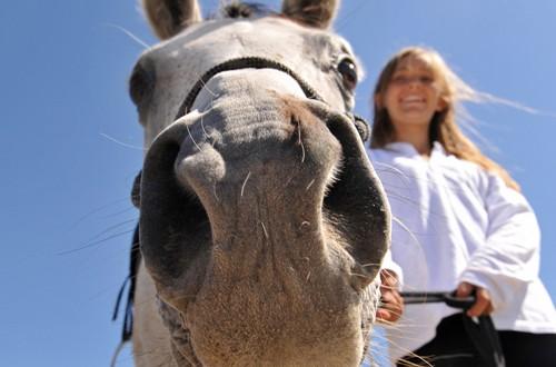 olfatto del cavallo