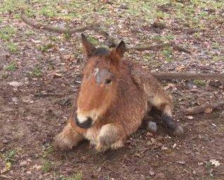 maltrattamento pony