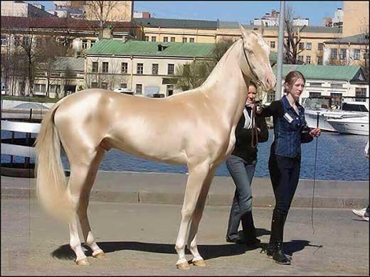 cavallo più bello del mondo