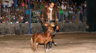 cavallo più piccolo