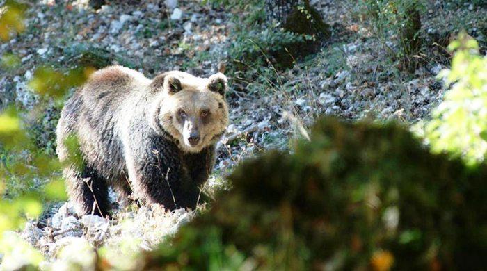 orso frosinone