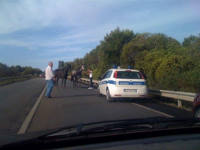 cavalli-in-strada