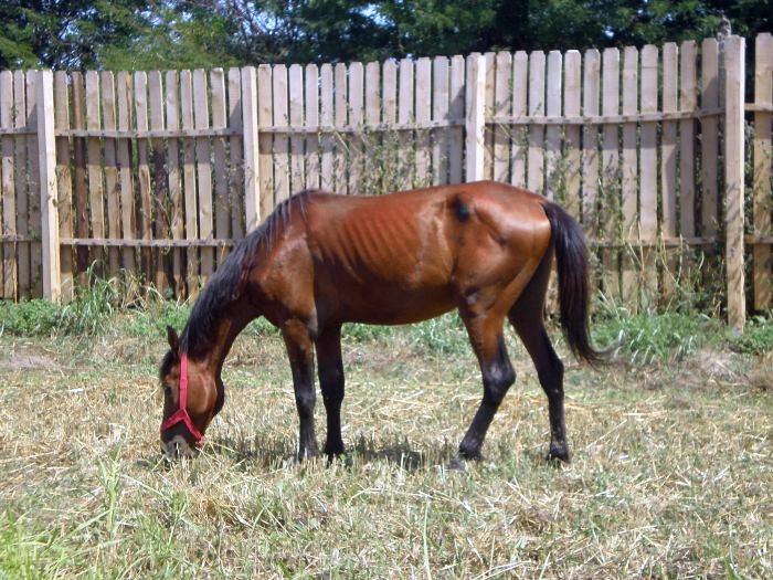 cavallo abbandonato
