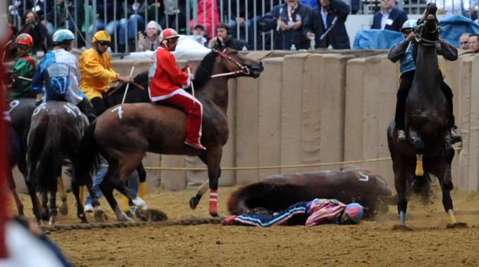 cavallo morto palio di asti